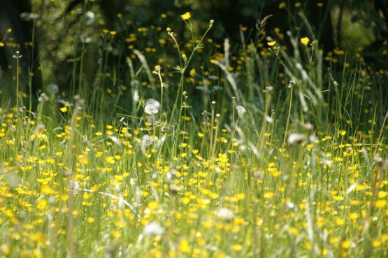 Meadow flowers during Spring