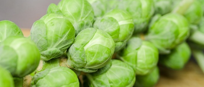 Water rich foods - brussel sprouts