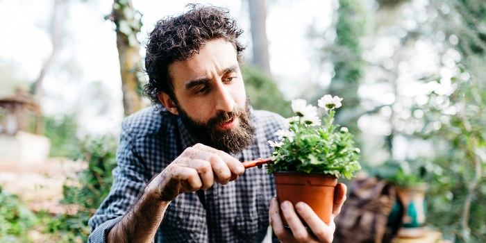 A man pruning flowers