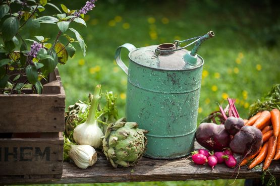 Image showing some garden vegetables on a bench