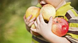 A young boy carrying apples
