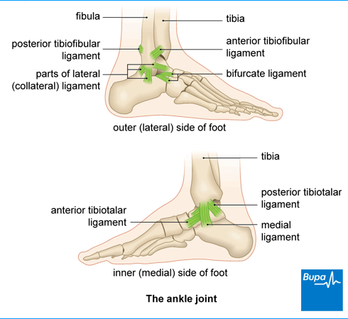 Image showing the ankle joint