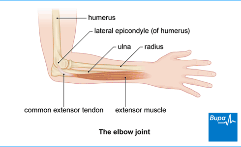 Image showing the elbow joint