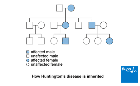 An image showing how Huntington's disease is inherited