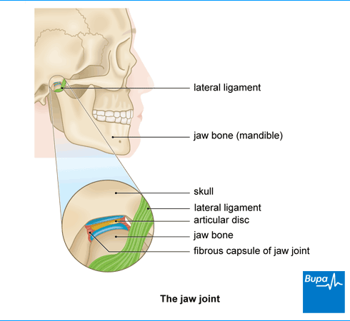 An image showing the jaw joint
